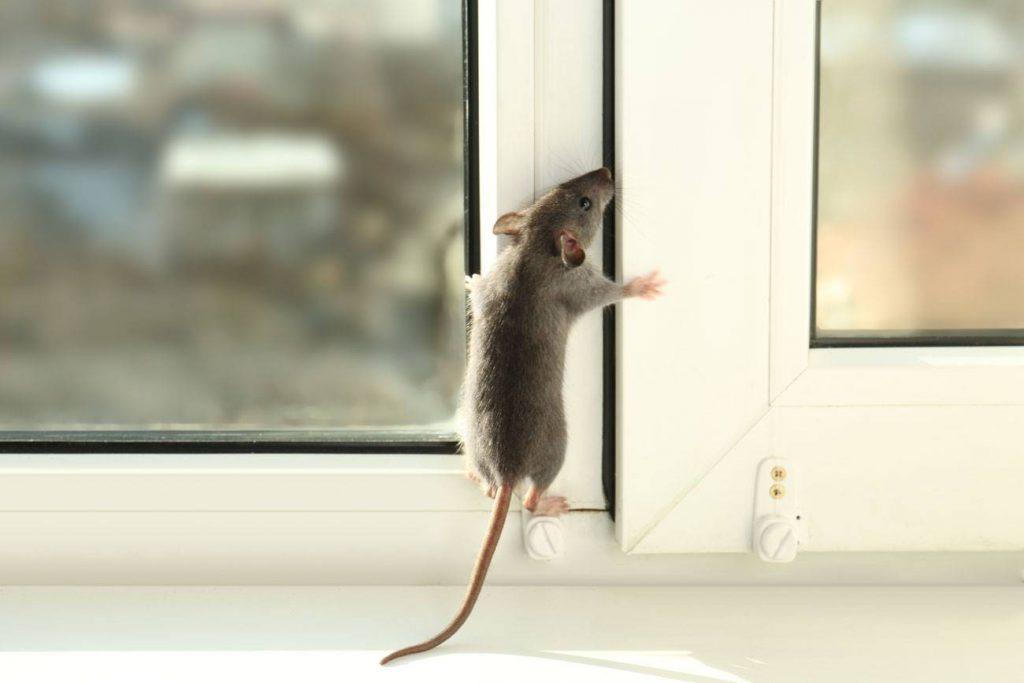 ¿Cómo liberarse de roedores e insectos?